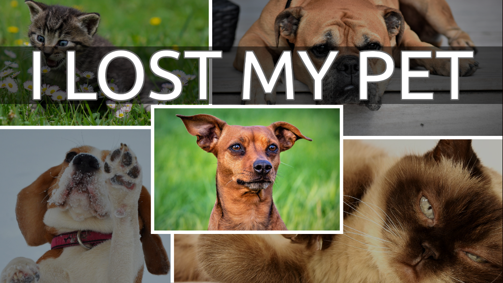 Click to Report a Lost Pet